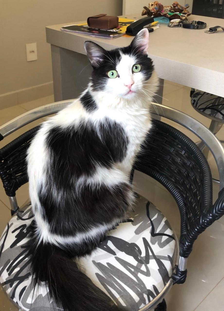 Bióloga denuncia morte de gato de estimação e faz campanha contra maus-tratos dentro de condomínio