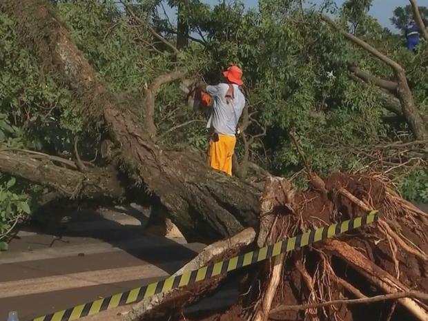 Mais de 150 árvores caíram com temporal (Foto: Reprodução/TV TEM)