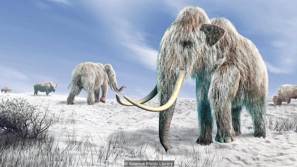 Seria possível clonar um mamute?  (Foto: Science Photo Library/Divulgação)
