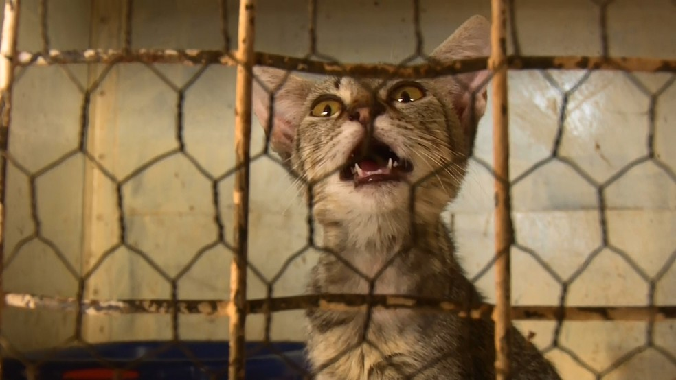 Animais são resgatados, cuidados e colocados para adoção — Foto: Reprodução/Rede Amazônica