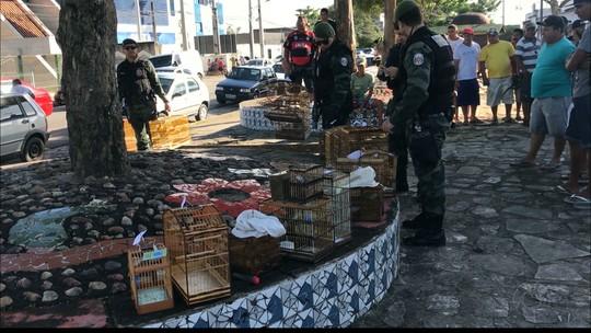 Polícia prende 15 pessoas com 110 aves que estavam sendo vendidas na Paraíba