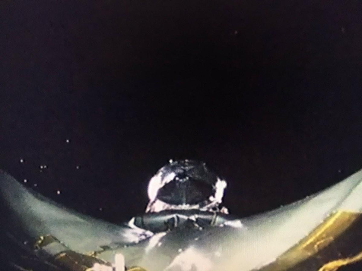 Imagem da TESS no espaço (Foto: Divulgação)