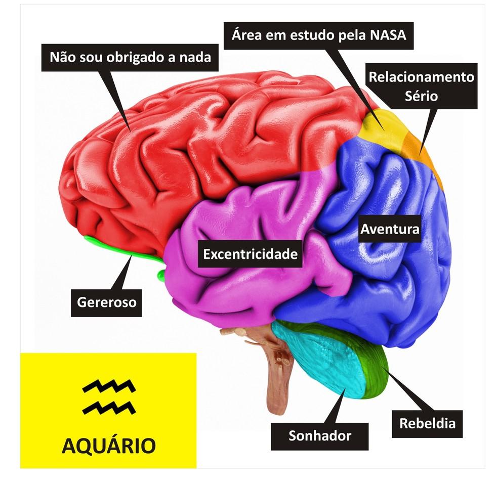 Cérebro de Aquário  (Foto: TV Globo )