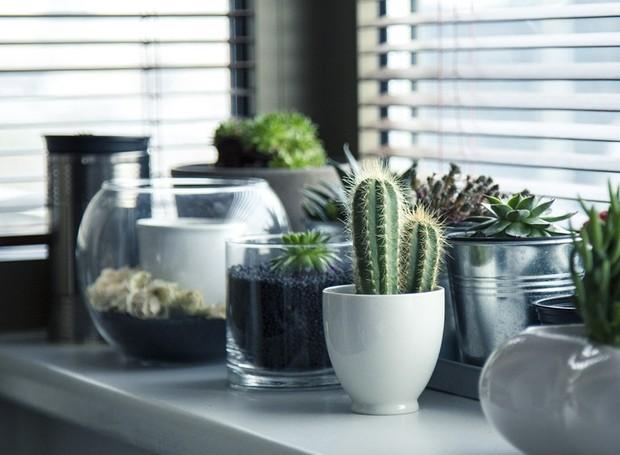 Cactos também são ótimas opções de decoração para a sua casa (Foto: Pixabay)