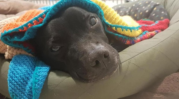 Cobertores doados pela britânica Maisie Green (Foto: Reprodução)