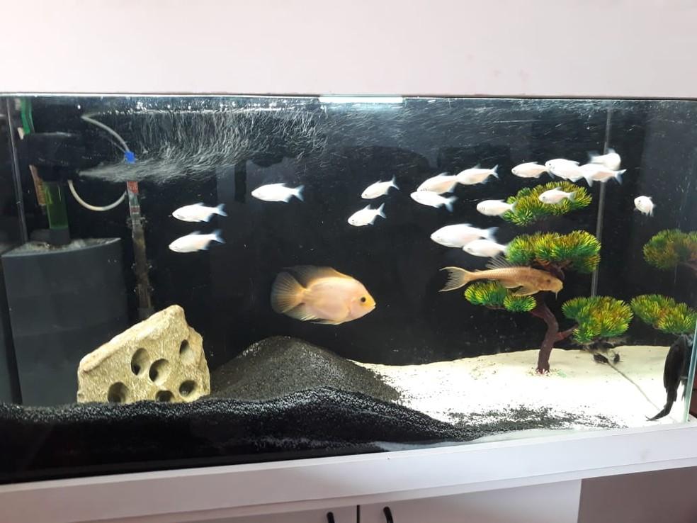 Veterinário diz que é importante regular a temperatura da água para os peixes (Foto: Arquivo Pessoal/Reynaldo Dias)