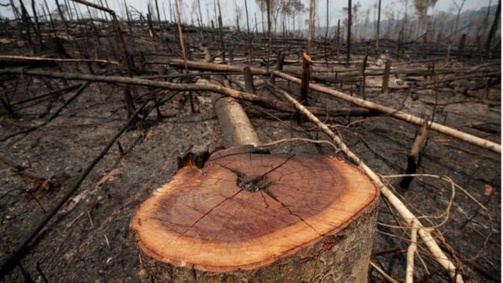 Sob governo Bolsonaro, desmatamento e queimadas na Amazônia aumentaram — Foto: Reuters