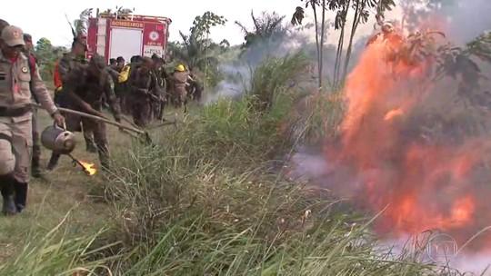 Focos de queimada na Amazônia superam a média histórica de agosto, diz Inpe