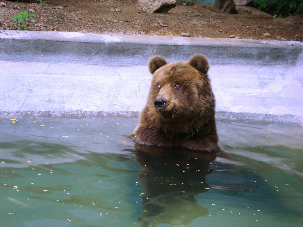 Matenedores do santuário defendem que arborização e piscinas do parque amenizam o calor — Foto: Santuário de São Francisco/Divulgação