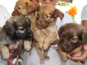 Filhotes de cães em feira de adoção de animais em João Pessoa, Paraíba (Foto: Inaê Teles/G1)