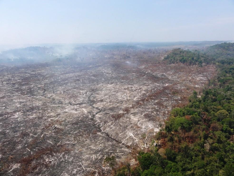 Área desmatada no Pará; estado teve queda e puxou índice da Amazônia Legal para baixo (Foto: Nelson Feitosa / Divulgação)
