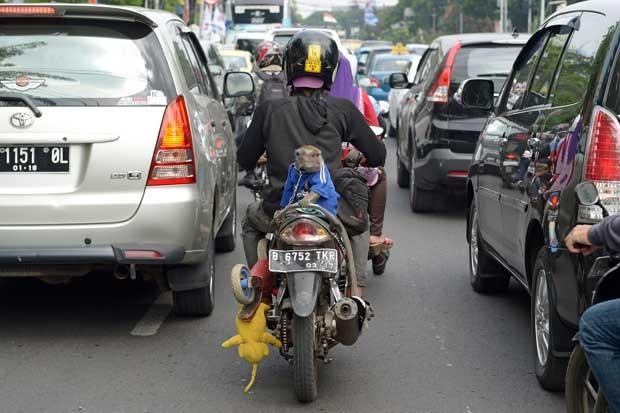 Macaco é transportado em garupa de moto pelas ruas de Jacarta (Foto: Adek Berry/ AFP)