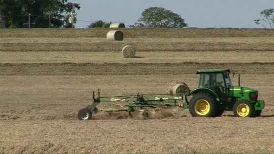 Feno produzido no Paraná abastece nove estados do país