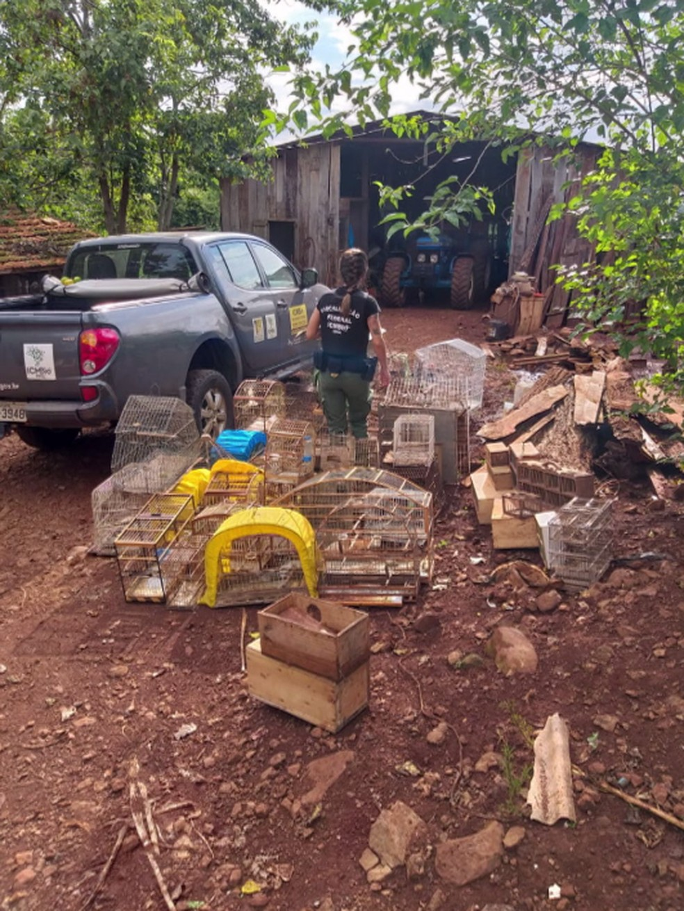 Durante a operação conjunta, na tarde de segunda-feira (11), foram apreendidas ainda cerca de 60 gaiolas e armadilhas para a captura de pássaros — Foto: PF/Divulgação