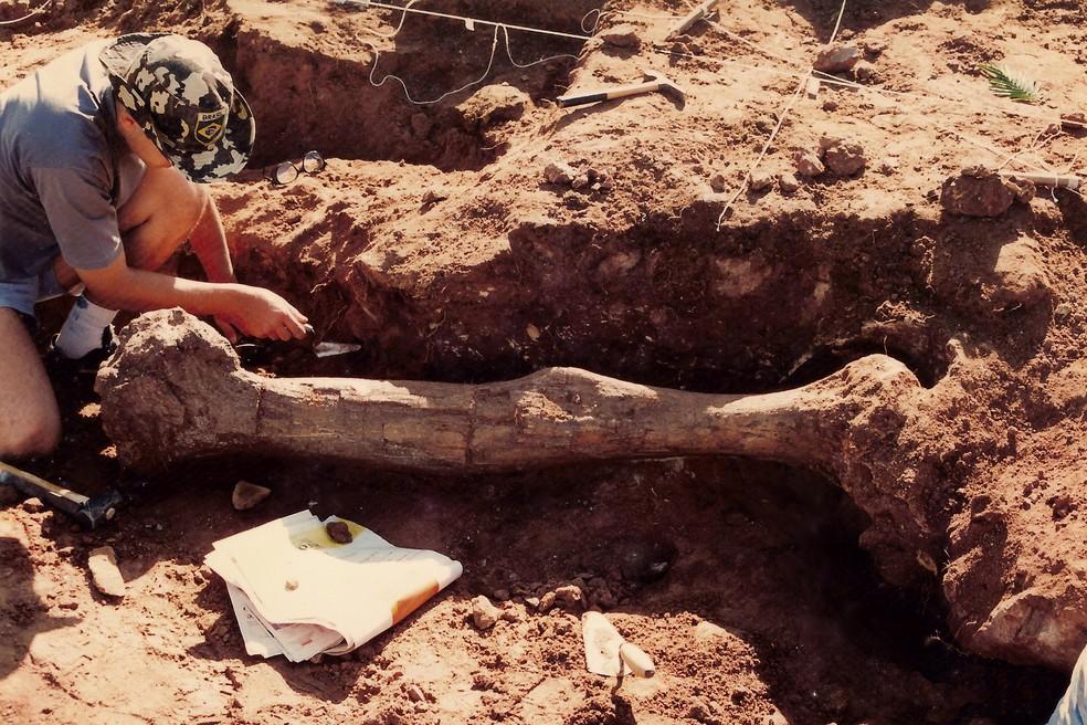 Vendedor de frutas e sobrinho encontraram por acaso fóssil do 'Arrudatitan maximus' em Cândido Rodrigues (SP) — Foto: Museu de Paleontologia de Monte Alto/Arquivo