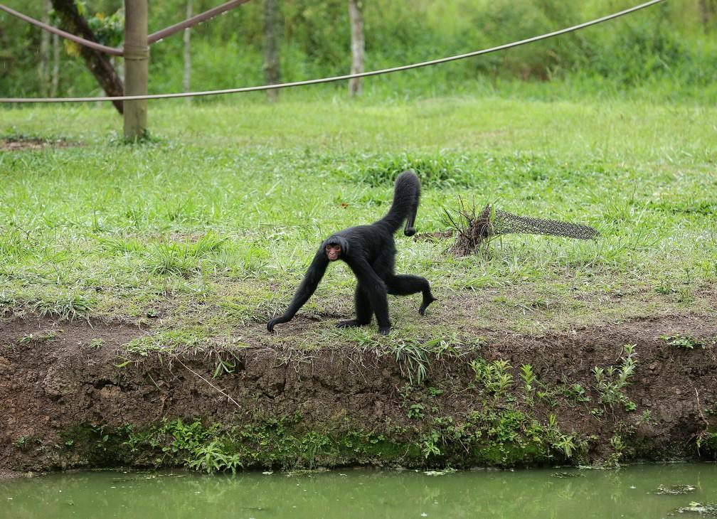 Primatas tem a mesma sensação de calor que os humanos, segundo a bióloga Nancy  — Foto: Giuliano Gomes/PR Press