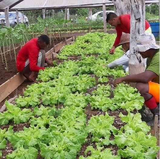 Hortaliças e artesanatos produzidos em presídios no AC vão ser vendidos na Expoacre - Notícias - Plantão Diário