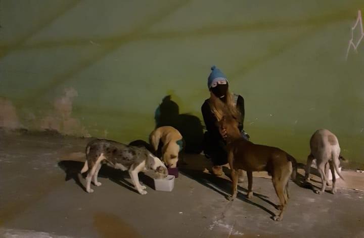Voluntários arrecadam doações para animais que vivem em ruas e abrigos do ES; confira como doar