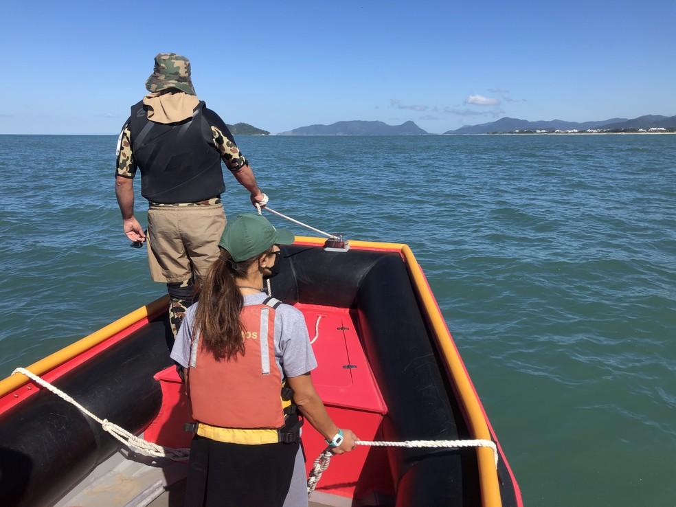 Equipes realizam monitoramento de baleias no litoral catarinense — Foto: Emanuel Ferreira/R3 Animal