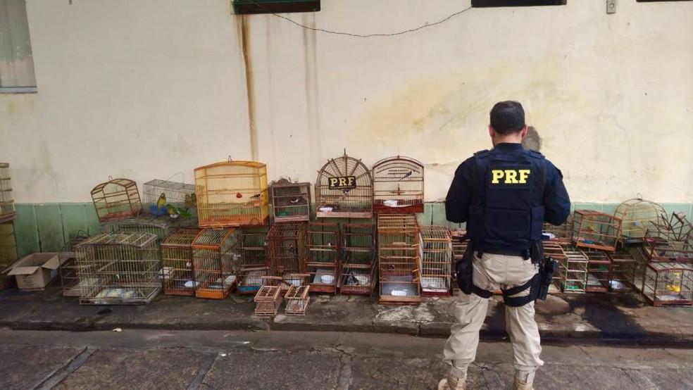 Aves foram apreendidas juntamente com gaiolas e armadilhas no Norte do Piauí (Foto: Reprodução PRF)