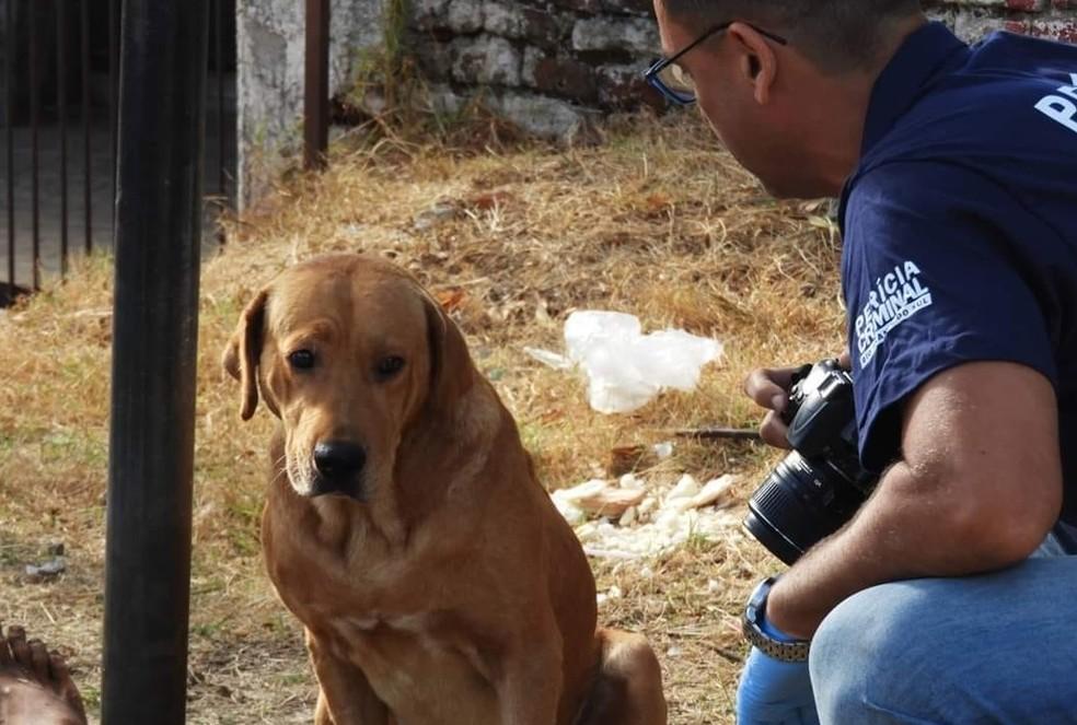 Scooby esperou todo o trabalho da perícia ser feito ao lado do dono morto em Santana do Livramento — Foto: Matias Moura/Jornal A Platéia