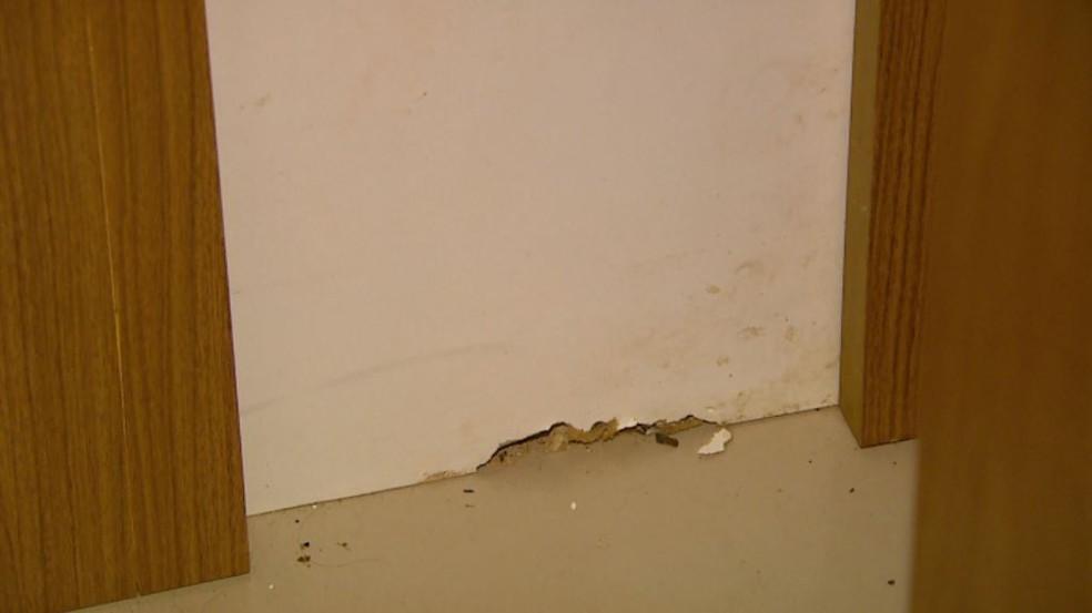 Cupins causam danos em apartamentos no Jardim Manoel Penna, em Ribeirão Preto — Foto: Reprodução/EPTV
