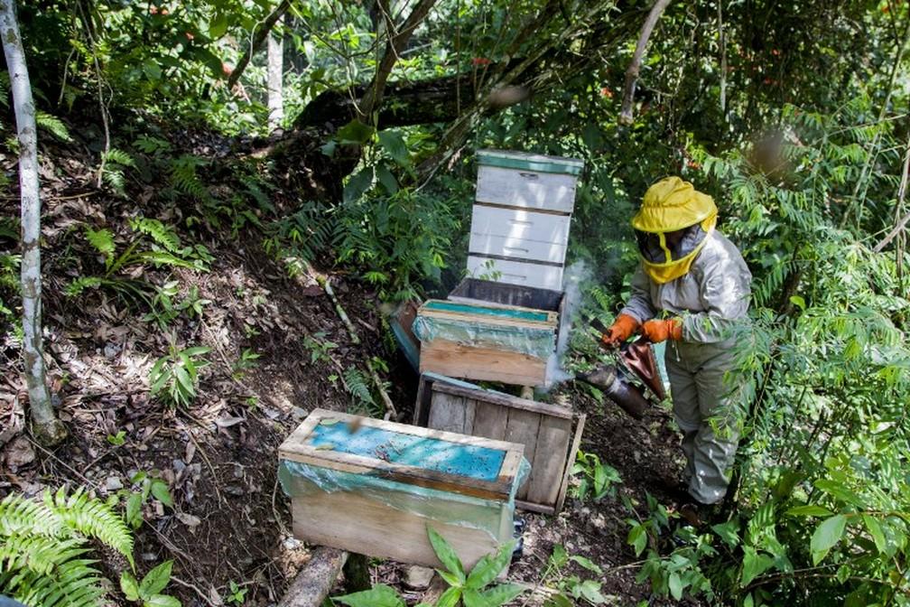 Pesticidas são solução para evitar que pragas ataquem as plantações de monocultura — Foto: William Wroblewski/AFP