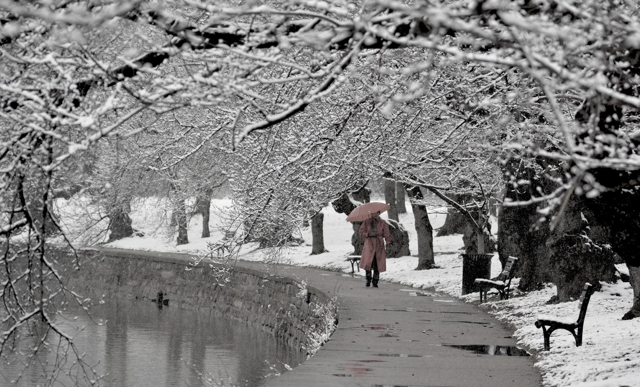 Congelamento pode adiar ou até impedir o florescer das cerejeiras.   (Foto: Creative Commons/ Flickr )