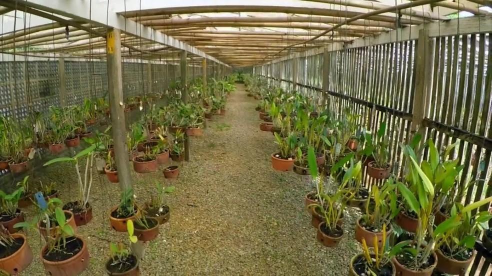 Orquidário em SP recebe plantas nativas apreendidas pelo Ibama — Foto: Reprodução/TV TEM