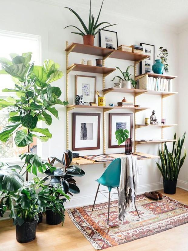 Plantas  (Foto: Pinterest/Reprodução)