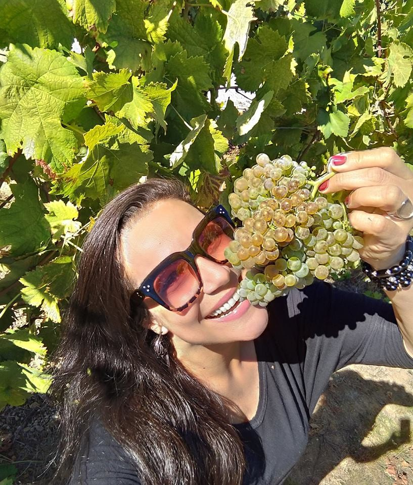Colheita Vinho verde (Foto: Elaine de Oliveira)