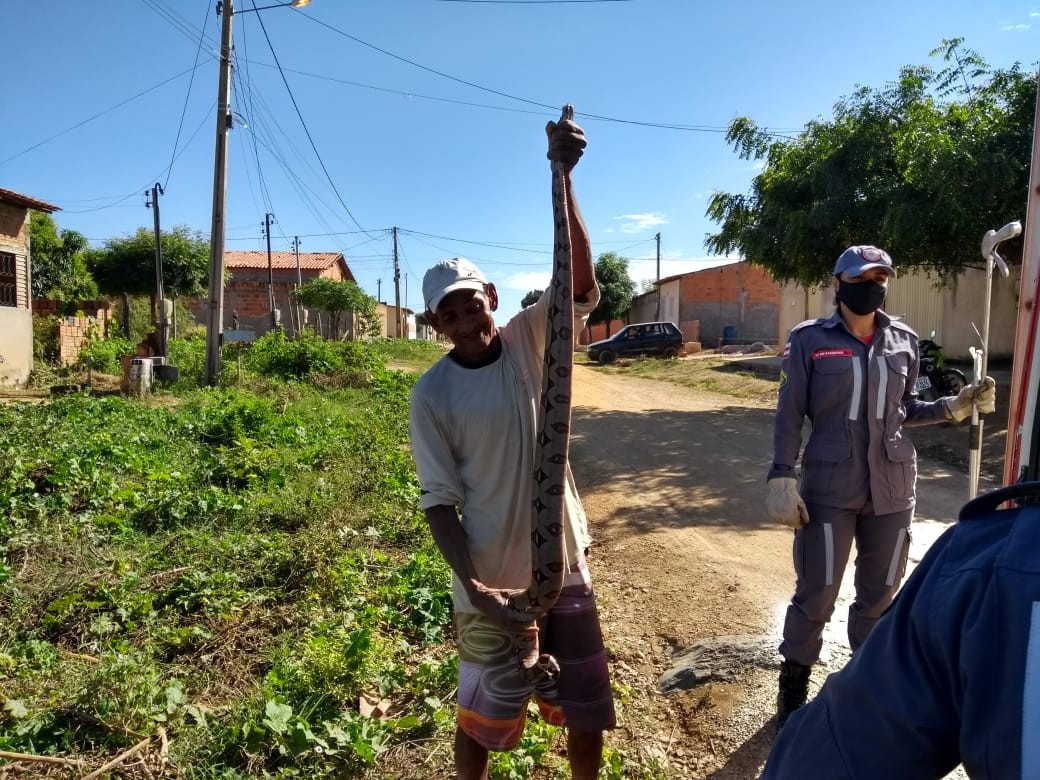 Morador segura jiboia com cerca de 2 metros após ser encontrada em residência no oeste da Bahia