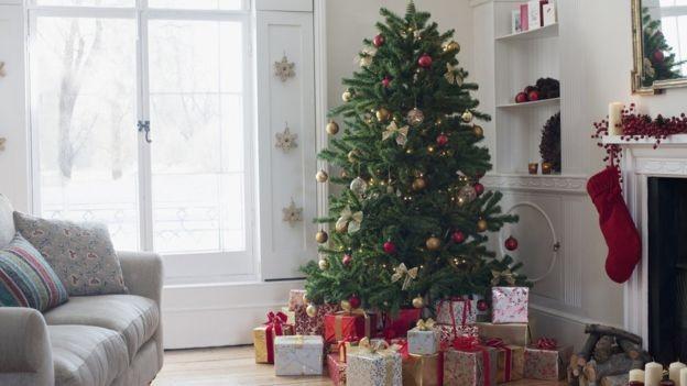 O 'cheiro' de Natal é reforçado nos pinheiros (Foto: Getty Images via BBC News Brasil)