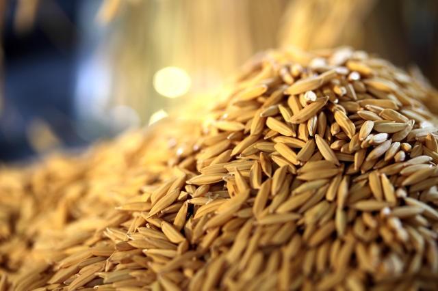 Brasil compra quase 200 mil toneladas de arroz dos EUA, Índia e Guiana, estima Abiarroz
