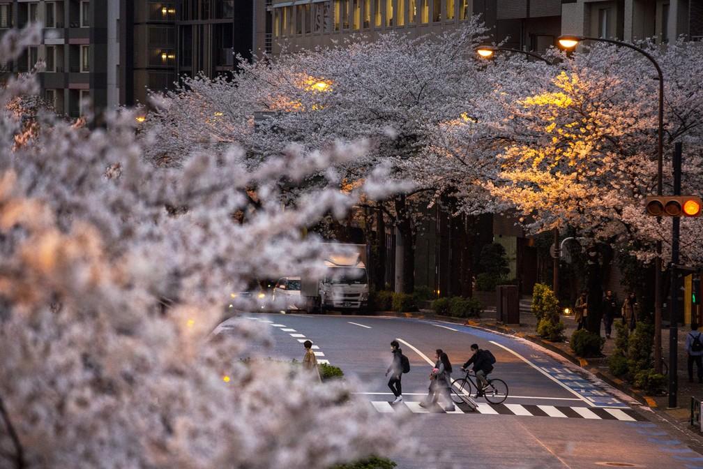 Pessoas atravessam rua em meio à florada das cerejeiras, a flor favorita do Japão, em Tóquio — Foto: Kiichiro Sato/AP