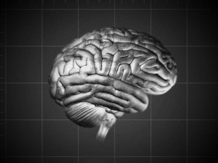 Cérebro.  (Foto: V. Altounian / Science Translational Medicine )