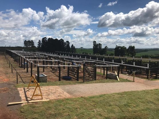 Com espaço maior para a pecuária, Show Rural terá 16 raças de bovinos - Noticias