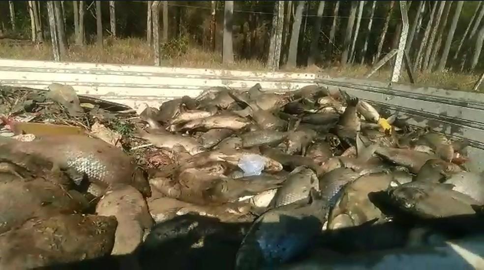 Equipe utilizou caminhão para retirar peixes encontrados mortos em rio de Salto  — Foto: Gilberto Esquerdo