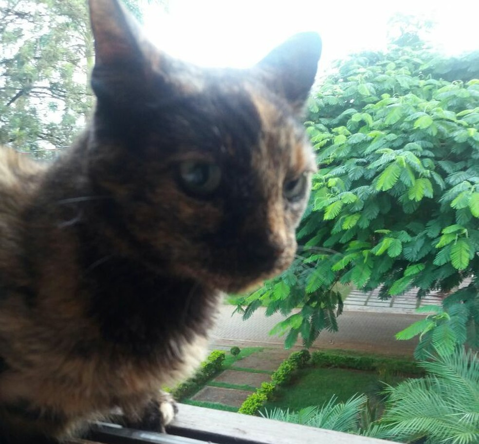 Mãe de Ana tirou uma foto do momento em que Saura reapareceu deitada na janela de casa (Foto: Arquivo Pessoal/Divulgação)