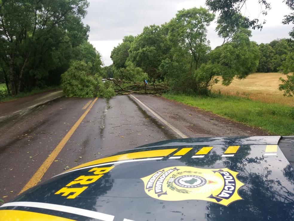 Árvore caiu com a força dos ventos e interrompeu o trânsito na pista da BR-386, nesta quinta-feira (16). Previsão é de chuva para todo o Estado (Foto: Polícia Rodoviária Federal/Divulgação )