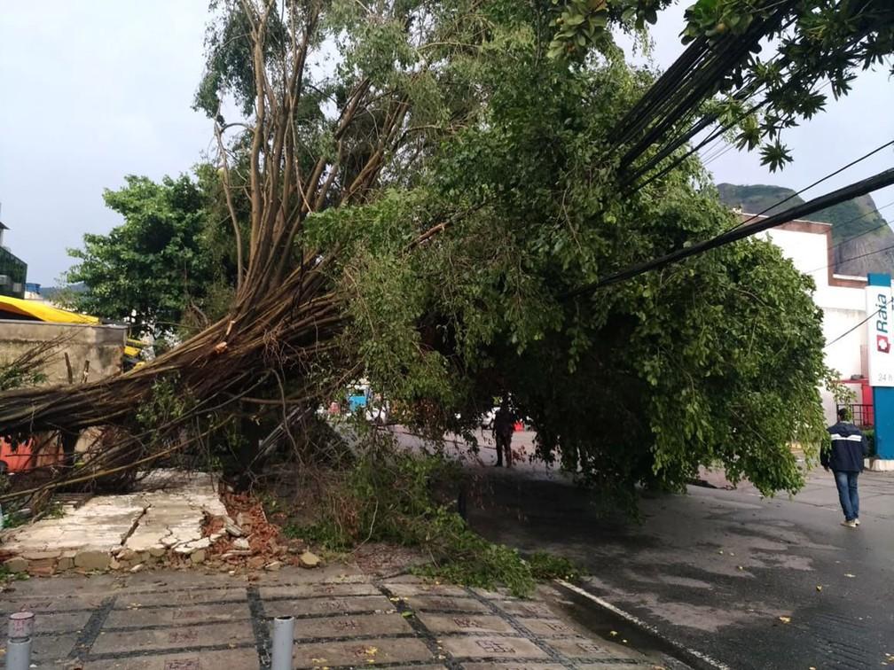 Chuva provocou queda de árvore sobre fios da rede elétrica na Barra da Tijuca, no Rio — Foto: Fernando Frazão/Agência Brasil