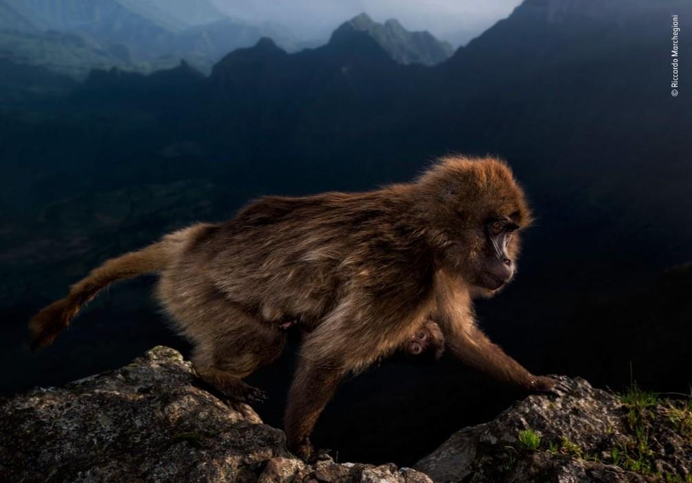 """Foto vencedora na categoria """"15-17 anos"""", do italiano Riccardo Marchegiani. Imagem foi registrada na Etiópia. — Foto: Riccardo Marchegiani"""