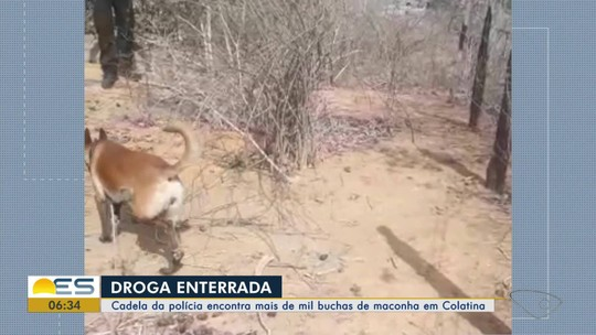 Cão encontra mais de mil buchas de maconha enterradas em Colatina, ES
