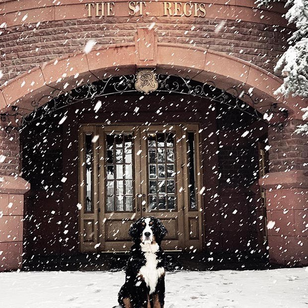 cachorro (Foto: Instagram/stregisaspen)