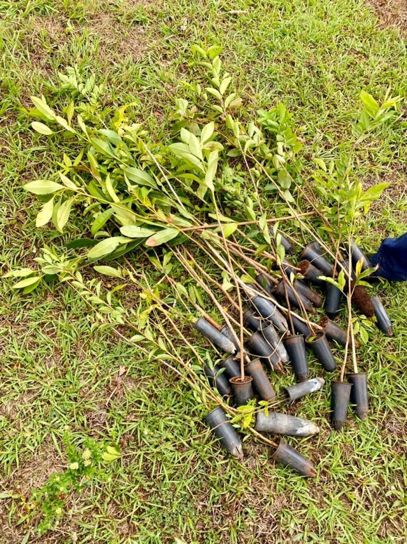 Mil mudas serão plantadas a cada 15 dias no Polo Rural de São Pedro da Aldeia, no RJ — Foto: Divulgação/PMSPA