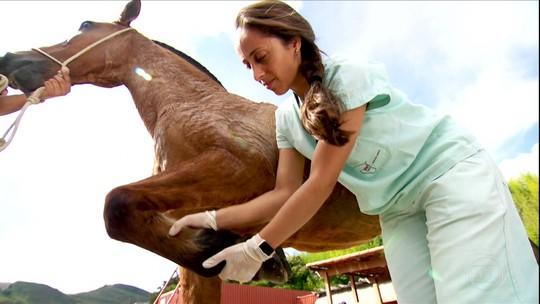Estudantes de veterinária promovem mutirões para atender cavalos de carroceiros de MG