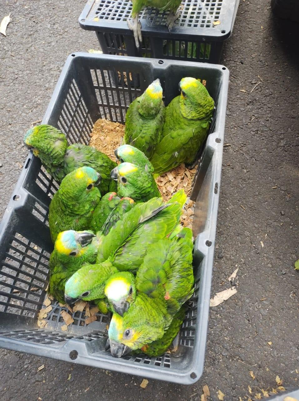 PRF apreende mais de 100 pássaros que eram transportados em condições de maus-tratos, na BR-373