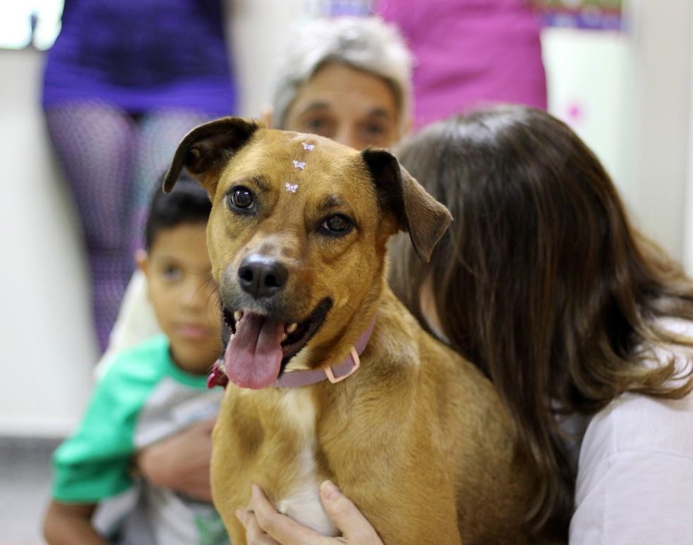 Cachorra socializa com crianças no Hospital Prontobaby — Foto: Divulgação/ Prontobaby