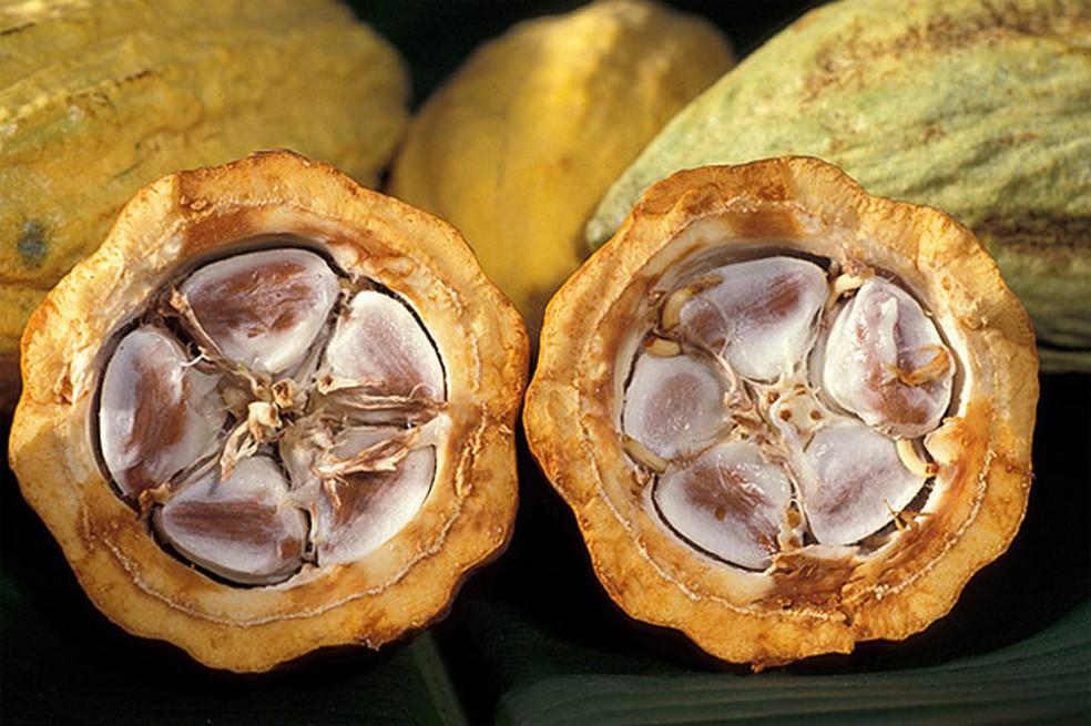 Fruto de cacau — Foto: USDA/Divulgação