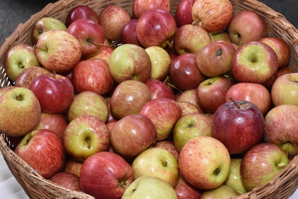Miolo da maçã pode ser usado para produzir vinagre. — Foto: Marco Aurélio/Prefeitura de Uberaba